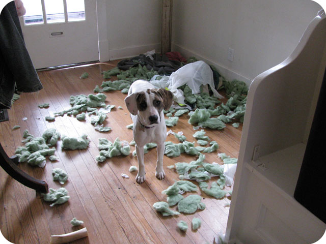 Dog Tearing The House Apart