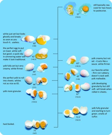 Egg Chart